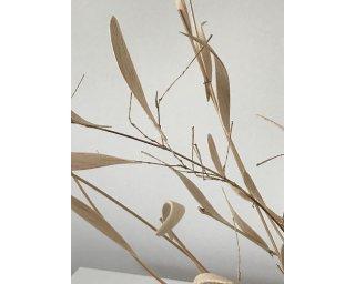 BREEZE (close up detail) by Natural Sculpture Artist Donna Forma