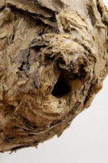 ALGAE BREAST by Natural Sculpture Artist Donna Forma