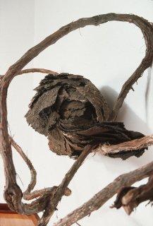 POD by Natural Sculpture Artist Donna Forma