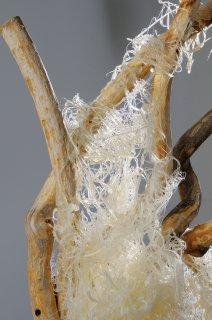 GLUE & WOOD  by Natural Sculpture Artist Donna Forma
