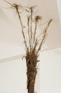 ROOTS by Natural Sculpture Artist Donna Forma