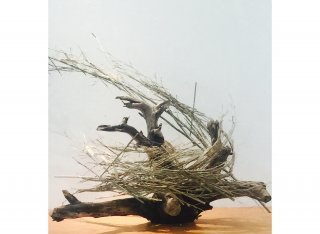 WINDSWEPT by Natural Sculpture Artist Donna Forma