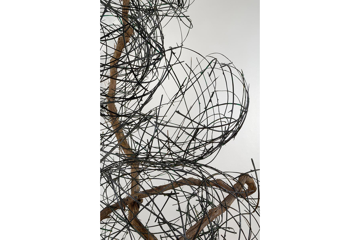 Bamboo and Vine natural art sculpture from Donna Forma