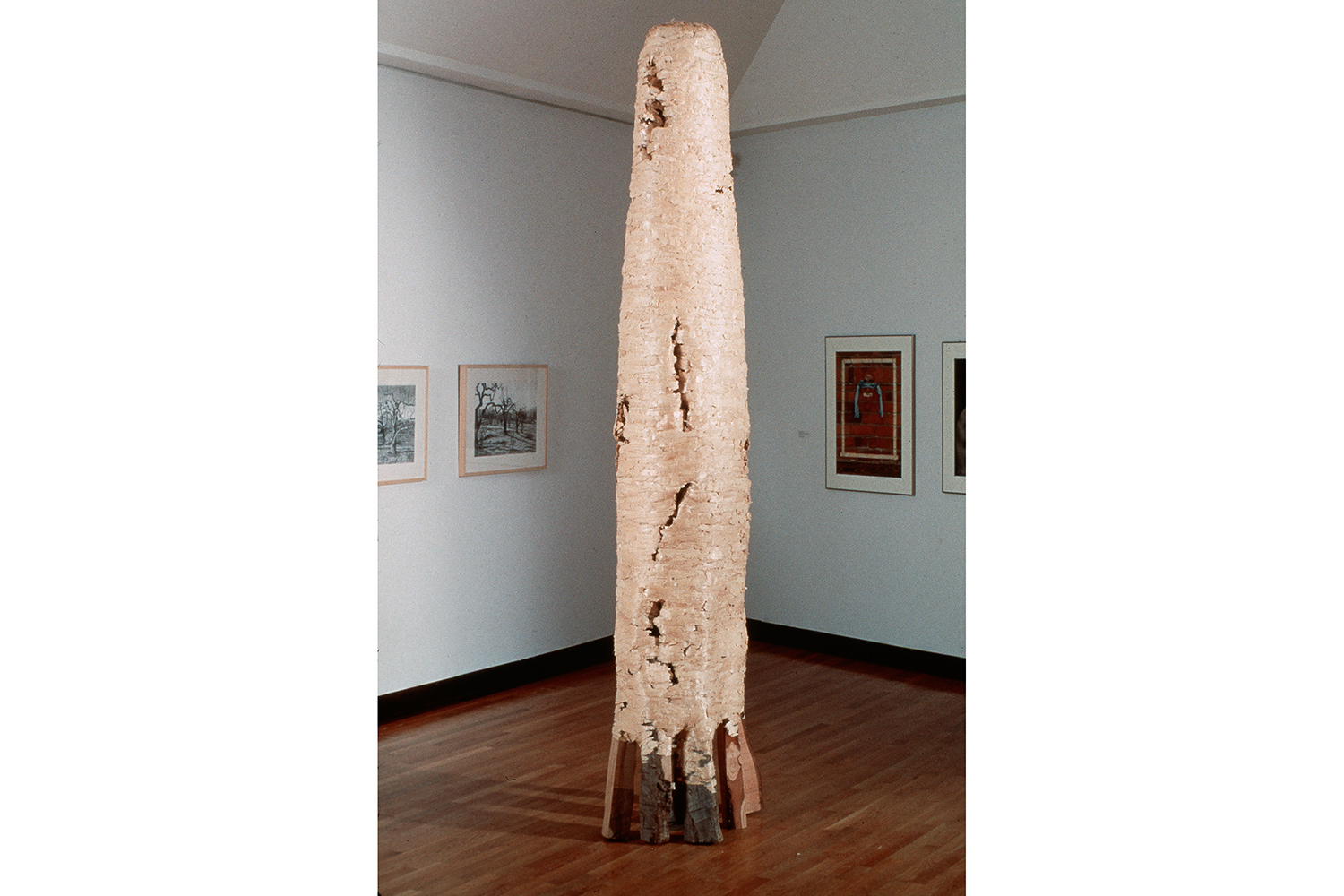 Cypress natural art sculpture from Donna Forma